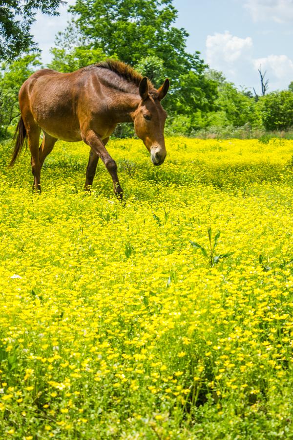 Alabama Horses