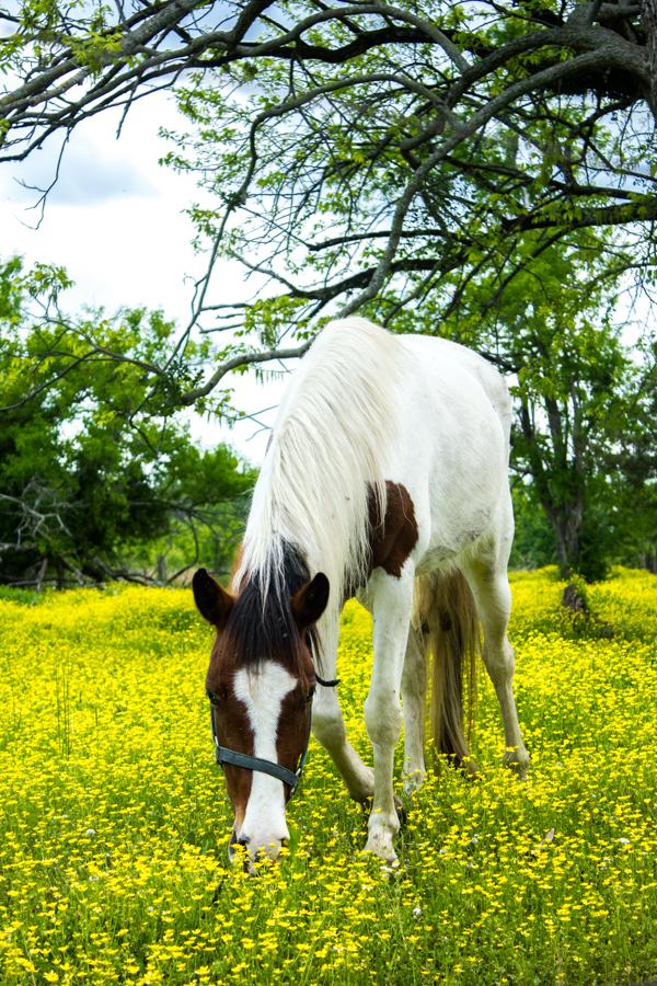 Alabama Horses 2